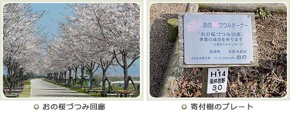 写真:おの桜つづみ回廊