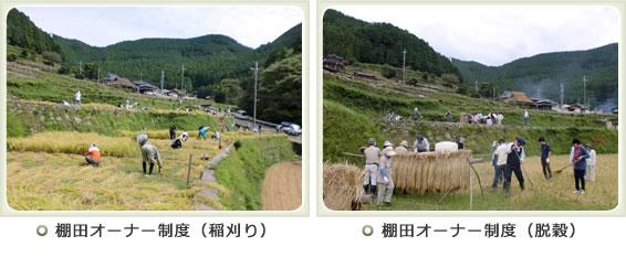 写真:岩座神・棚田オーナー制度(稲刈り・雑穀)