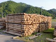 松(カラマツ)原木在庫