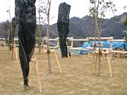 造園用杭の使用事例