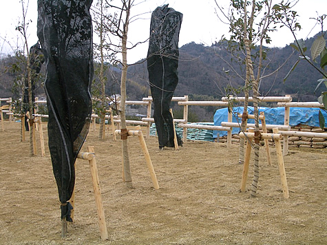 (写真)樹木支柱