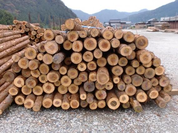 第二木場で選木後加工場に搬入された間伐材の荷姿 (切口側から)