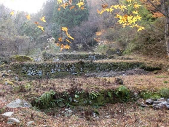 「金山廃村」 水田跡と思われる石垣