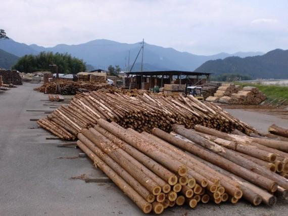第二木場に入荷した間伐材の原木