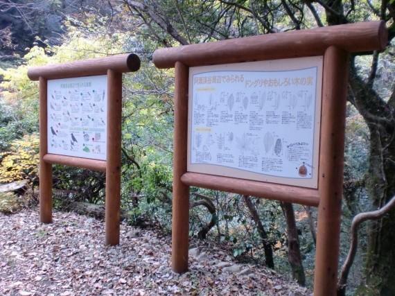阿瀬渓谷・恐れ滝付近 阿瀬渓谷で見られる動植物を記した案内板