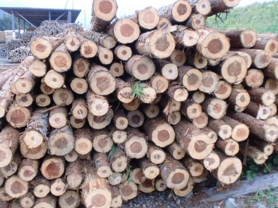 間伐材の入荷時の様子 (枝の一部がついていたり、山の土がついています)