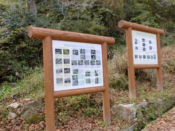 阿瀬渓谷・案内板(動植物) 渓谷内で見られる動植物を解説しています