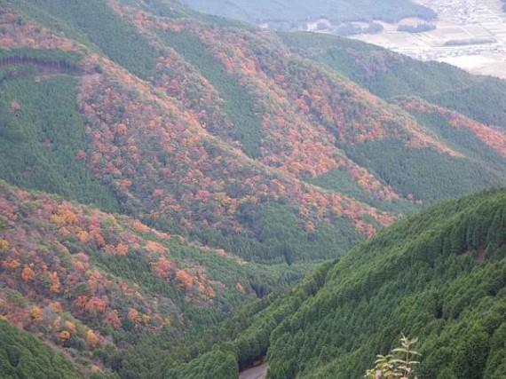 木製資材を荷揚げした地点からの眺め (紅葉した山)