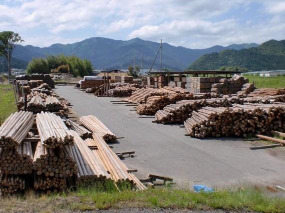 第二木場に在庫された「足場丸太」と間伐材・原木の在庫