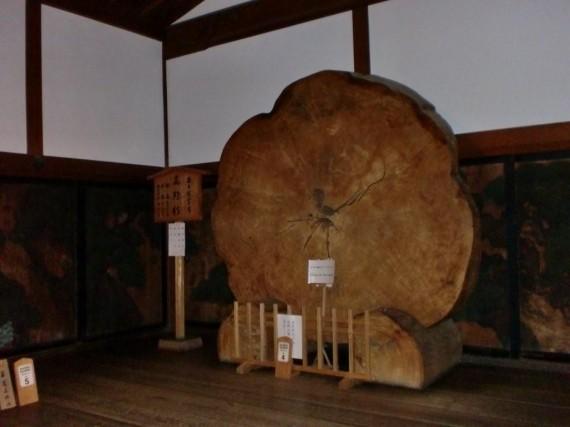 金剛峯寺に展示されていた直径2m超の「高野槇」の切り株
