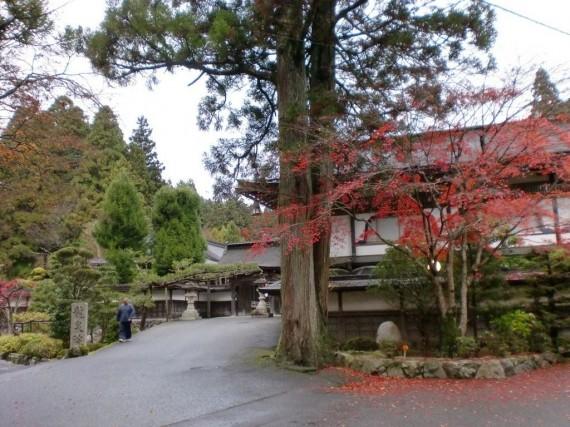宿泊した宿坊 (門前のモミジが紅葉し、散りかけていました)