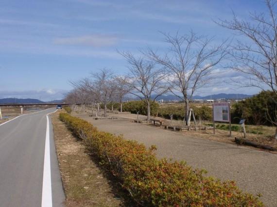 「おの桜包み回廊」 寄付樹付近の並木