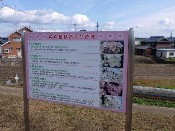 「おの桜づつみ回廊」 桜の種類の説明版
