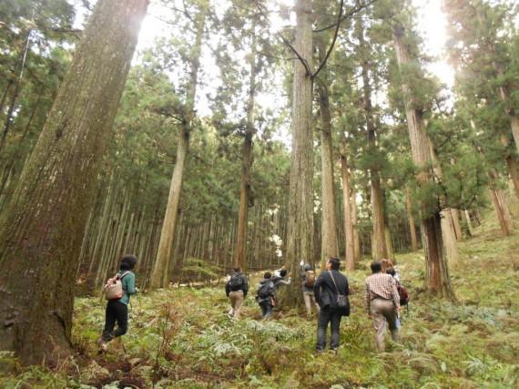 「吉野林業のふるさと」 川上村の約250年生の杉林