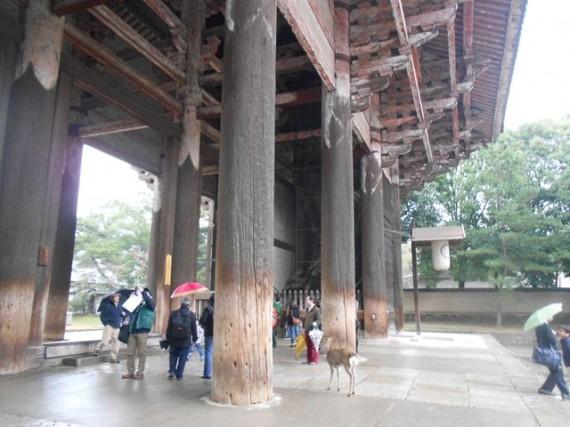 「東大寺・南大門」のヒノキの大柱(丸柱・円柱)  直径1m×高さ21mの柱が18本あります
