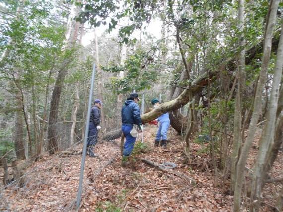 倒木で損傷した「鹿柵」
