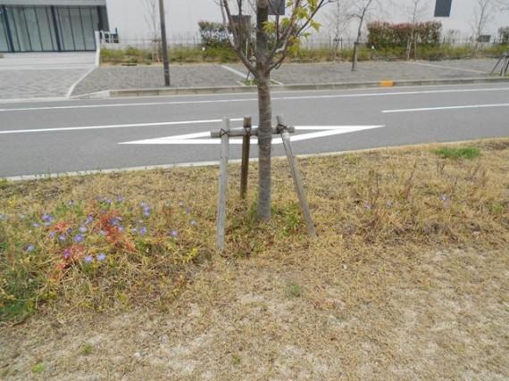 「桜」も気になりますが、それ以上に足元の「緑化支柱・資材」の状態が気になります。