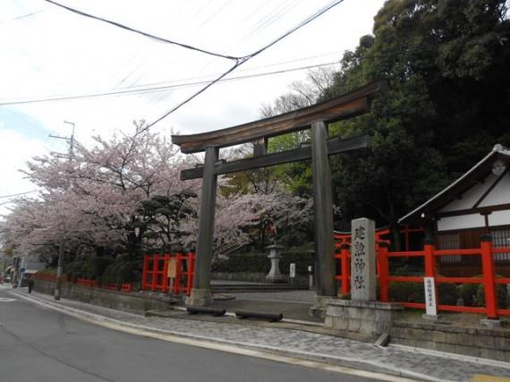 「建勲神社の明神型大鳥居」と満開の桜