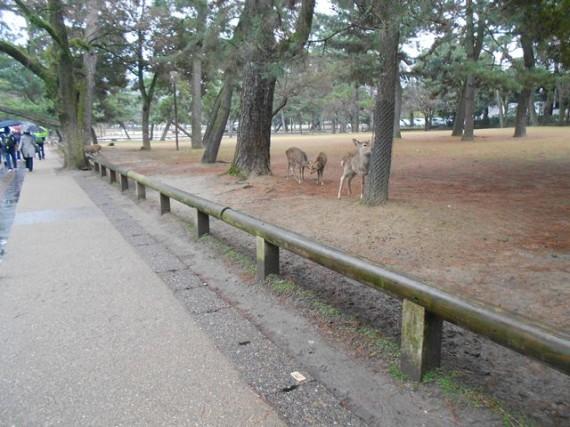 間伐材マイスターの『丸柱・円柱巡礼』シリーズを開始  (予告)