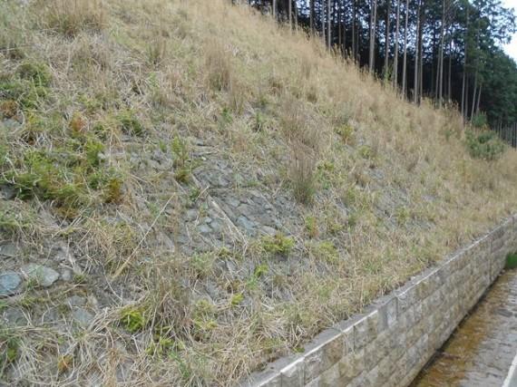 「ラベンダーパーク多可」への接続道路脇の「土留め工」施工地 (H24/4撮影)
