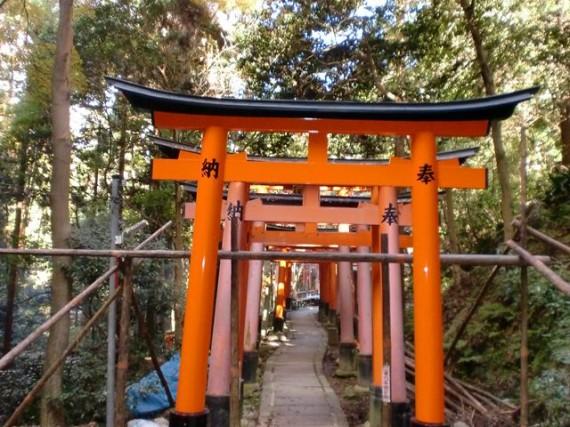 「伏見稲荷大社」の奉納鳥居 (再建・修理時には周りの鳥居を傷めないよう「木製の足場丸太」が使われます)