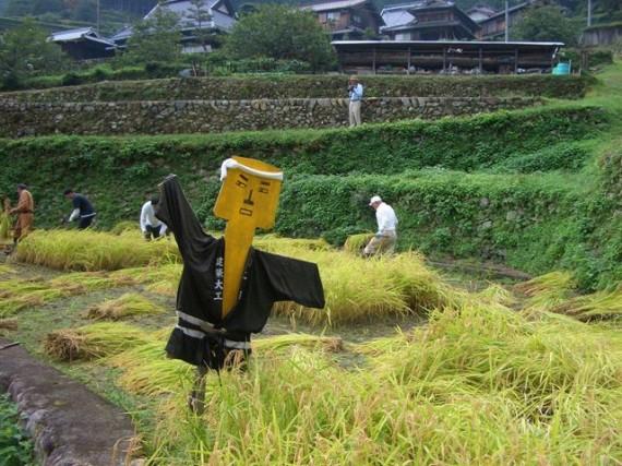 「棚田オーナー制度・稲刈り」 『建築大工の玄さん』も稲刈りの手伝いに登場