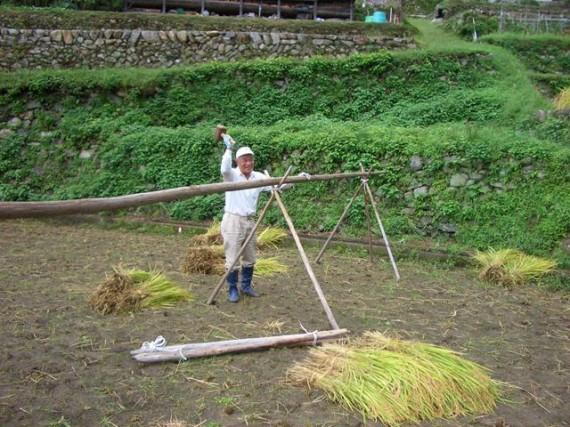 「棚田オーナー制度・稲刈り」で、稲木を組み上げているところ