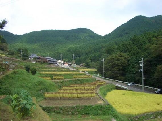 「棚田オーナー制度・稲刈り」が終了した 『棚田の稲木干し』 の風景