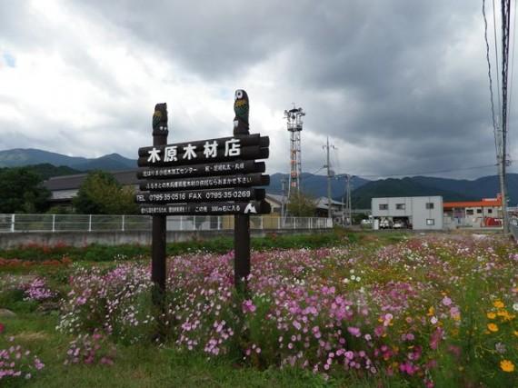 休耕田の「コスモス畑」の立つ弊社「木製看板」(案内板)
