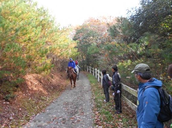 紅葉の三木ホースランドバーク 「馬優先」で道端によけるウオークの参加者