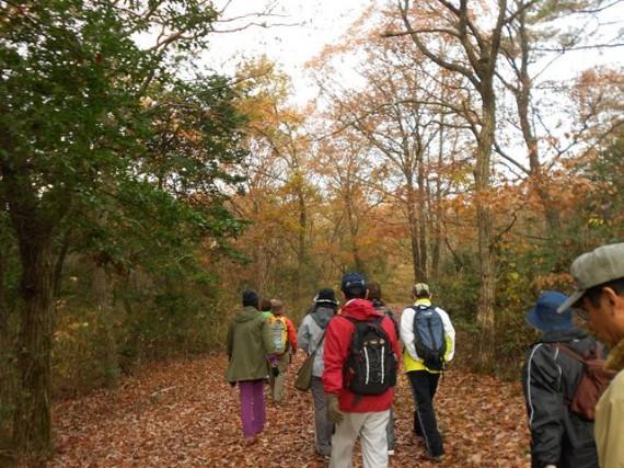 紅葉の三木ホースランドパーク 「紅葉の森林浴10kmコース」にチャレンジ中