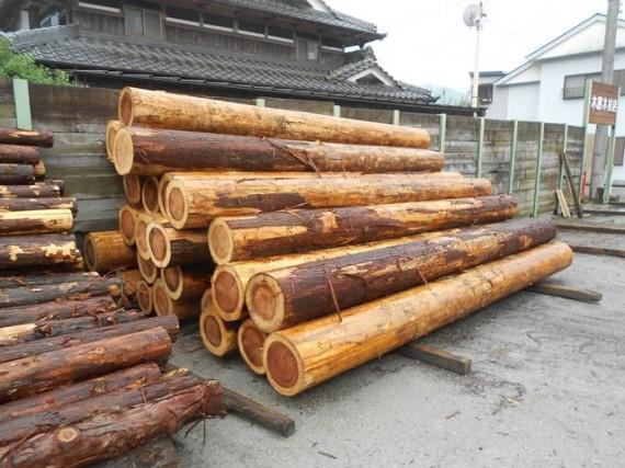 加工を待つ「直径30cm超の大径木」2