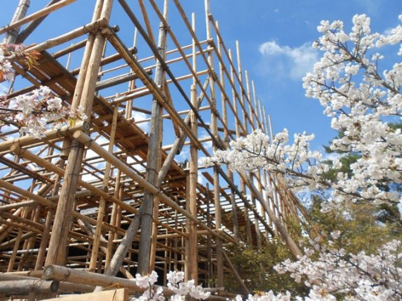 「桜」の間から見た「足場組み」 (その2)