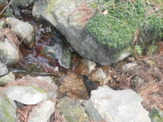 山中に設置された自家用簡易水道 (取水口付近)