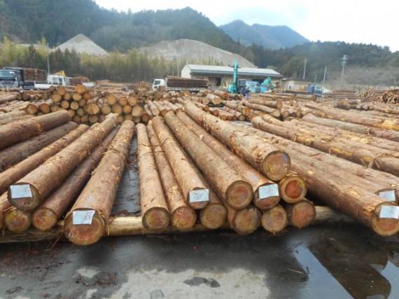 「長さ6m・長尺材」の原木確保にも努めています
