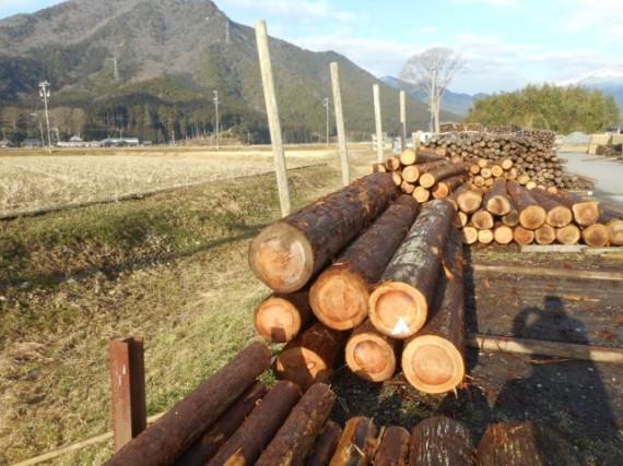 直径46cmの杉丸太『丹波四十六朗』 (左上)