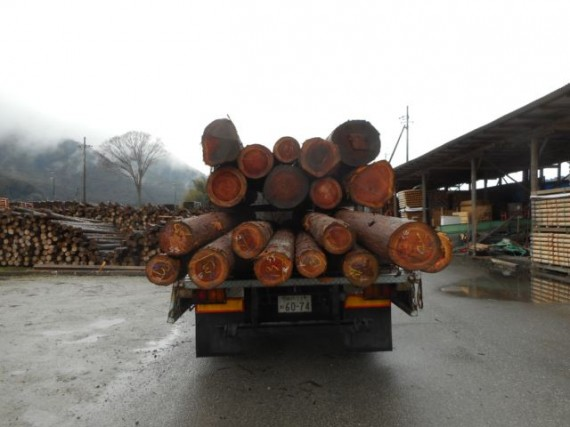 初市で落札した30cm級の原木の持ち帰り