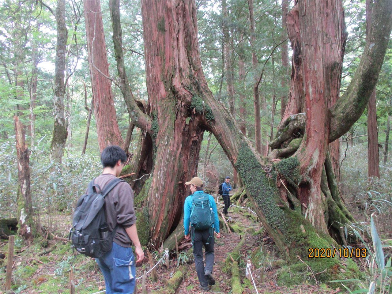 「『屋久島』へ行って来ました!?」 四国・林業先進地見学記(その1)